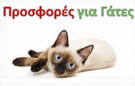 Προσφορές για Γάτες